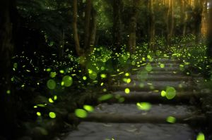 fireflies-glowing.jpg.653x0_q80_crop-smart